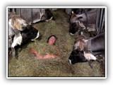 Ab nun brauchen Sie nicht mehr zwischen den Kühen zu schlafen um in unserem Heu genießen zu können. Nehmen Sie  Kontakt mit uns auf und bestellen Sie Ihr Südtiroler Bergwiesenheu zu Ihnen nach Hause.
